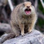 mad_squirrel